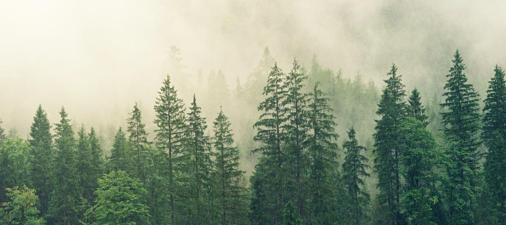 24 maja - Europejski Dzień Parków Narodowych. Zadbaj o aspekt ekologiczny w swoim biurze!